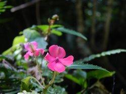 +flor