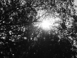 entra luz