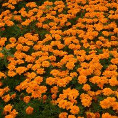 laranja (2)